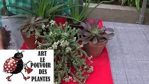 Bouture Plante Verte : tuto jardinage crassula rupestris comment faire une bouture plantes vertes succulente ~ Melissatoandfro.com Idées de Décoration