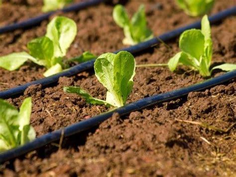 irrigazione orto impianto irrigazione irrigare lorto