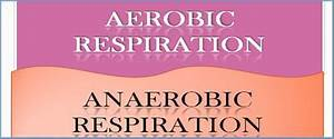 Difference Between Aerobic And Anaerobic Respiration With