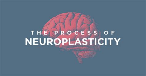 process  neuroplasticity  making  connections