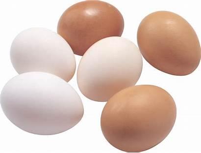 Eggs Transparent Egg Huevos Telur Fond Oeufs