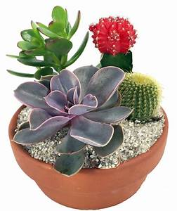 Pot A Cactus : cactus succulent garden with neon cactus 5 clay pot 4 different plants ebay ~ Farleysfitness.com Idées de Décoration
