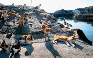 cat island 20 seriously places around the world guides