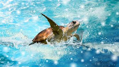 Turtle Background Turtles Wallpapers Wallpaperaccess Backgrounds