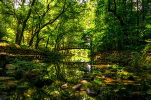 Summer Creek Scenery