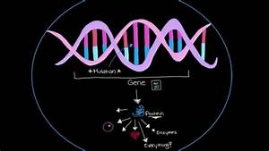 Khan Academy - Genetics And Parkinson U0026 39 S Disease
