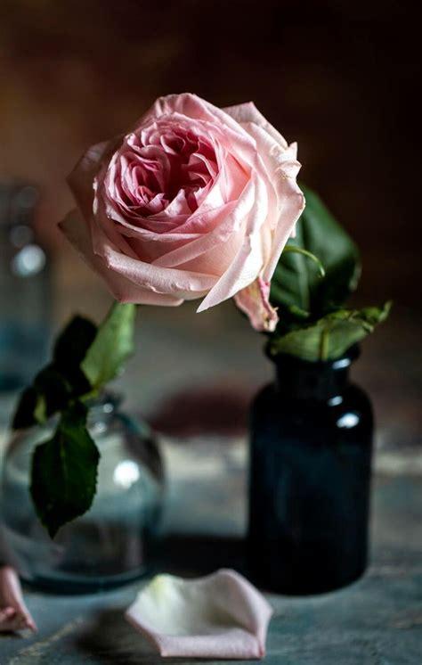pinterest.com | Beautiful flowers, Beautiful roses ...
