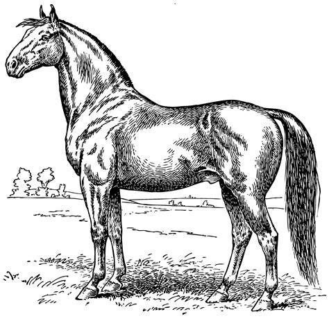 vintage horse coloring page  clip art