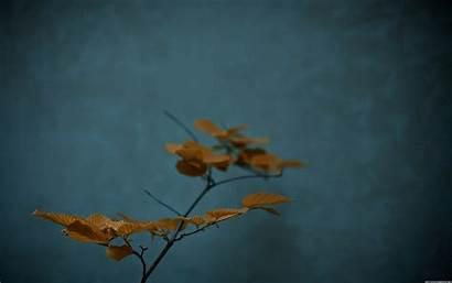 Zen 1920 Simple Wallpoper Teal Close Garden