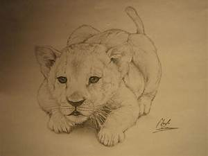 Little Baby Lion by cdan777 on DeviantArt