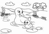 Pond Coloring Pages Ducks Printable Adults Print Friends sketch template