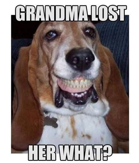 Best Basset Hound Memes Of All Time
