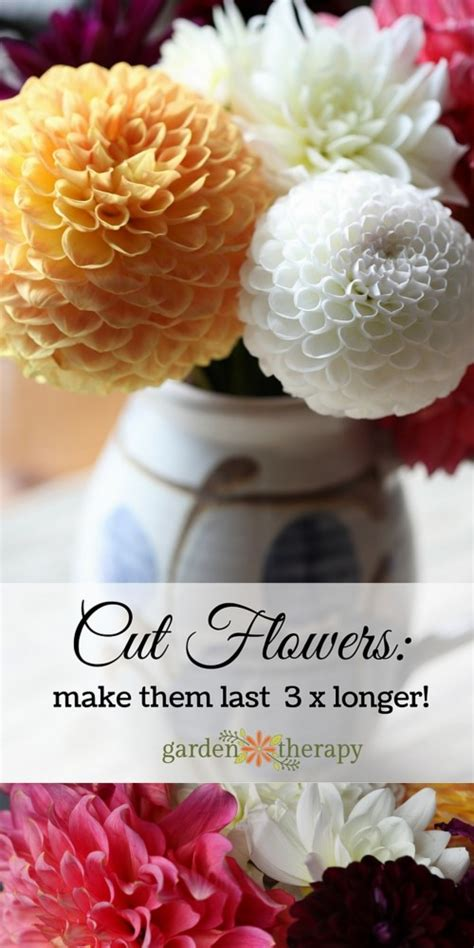 Make Cut Flowers Last Longer by How To Make Cut Flowers Last