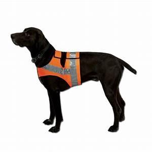 Video Pour Chien : ducatillon gilet fluo pour chien chiens ~ Medecine-chirurgie-esthetiques.com Avis de Voitures