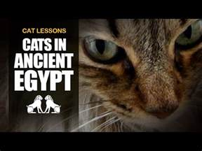 10 facts about cats cats 10 facts about cats in ancient