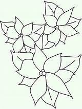 Poinsettia Coloring Outline Drawing National Lineart Pages Drawings Netart Getdrawings Paintingvalley Colorluna sketch template