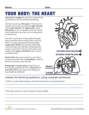 understanding the human 5th grade worksheets
