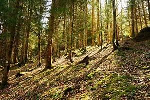 Foret à Bois : alpes foret sous bois routes d 39 altitude ~ Nature-et-papiers.com Idées de Décoration