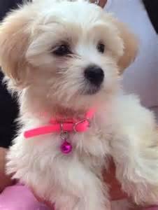 Coco Dog Name