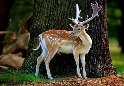 beautiful animal pictures wallpaper beautiful animals wallpapers animals beautiful animal wallpaper nature animals