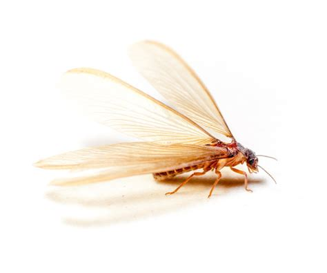 Best Ways To Get Rid Of Flying Termites (winged Termites. Construction Quality Management For Contractors. Merchant Statement Analysis Long Term Care. How To Succeed In Internet Marketing. Live Clock With Seconds Make A Website Mobile. Fundraising Websites For Nonprofits. Chicago Moving Services Ms Project Equivalent. Cheapest Business Class Seats. Correspondence School Courses