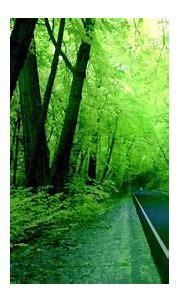 Hd Wallpaper Nature Green | Free Hd Wallpaper Nature Green ...