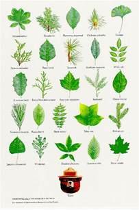 best 25 tree leaves ideas on plant identification tree identification and