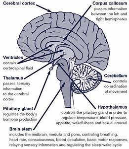 What Lobe Of The Brain Controls Motor Functions