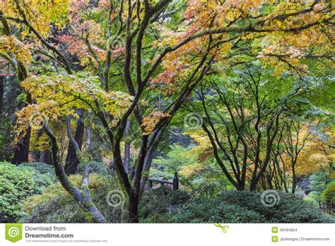 fall colors at portland japanese garden stock photo