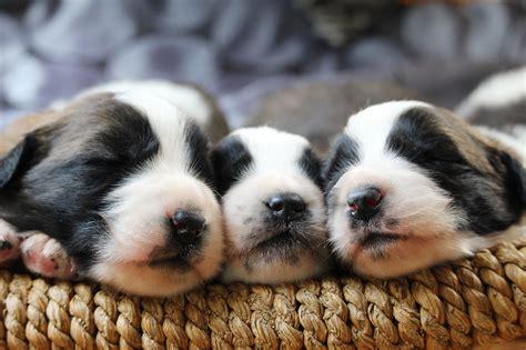 produktsuche hundefutter hundefutter warentest