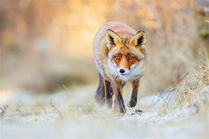 Wildlife In Switzerland  Explore The Wild Side Of The Country