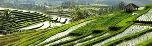 Agriculture In Indonesia GBG