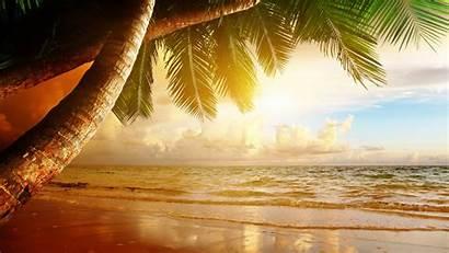 Beach Landscape Wallpapers Trees Palm Nature Desktop