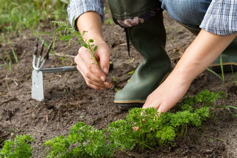 Erbacce e infestanti perché è importante toglierle dall orto