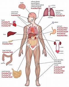 9  Free Body Diagram