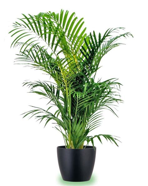 indoor house plants 20 indoor house plants that simply adore shade