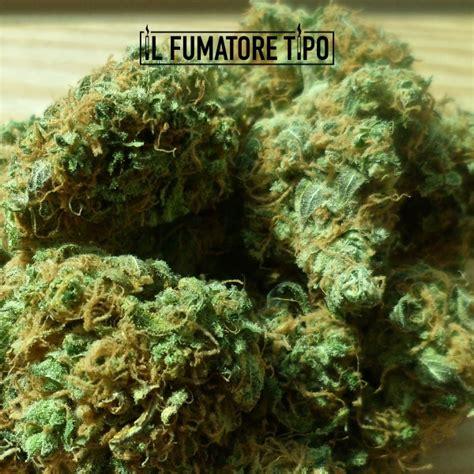 but canapé lit i prezzi della cannabis light in italia land of rolling