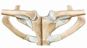 Грудной остеохондроз симптомы и лечение и гимнастика