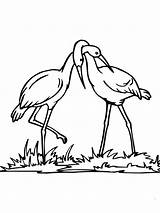Coloring Stork Couple Pages Supercoloring Realistic Printable Bird Colouring Coloringtop Categories sketch template