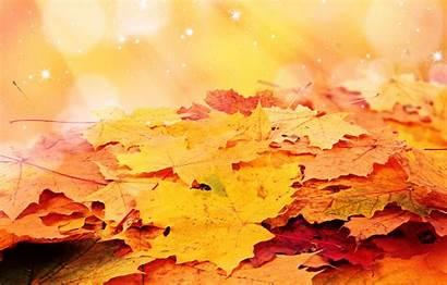 Maple Foliage Autumn Nature