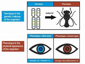 Genotype Illustration