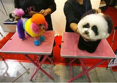 China Dogs Pets Pet Wuhan Fur Hubei