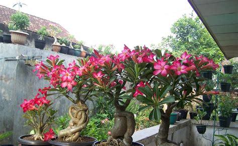 tanaman hias termahal dunia tumbuhan