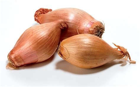 what are shallots fall planted shallots rodale s organic life