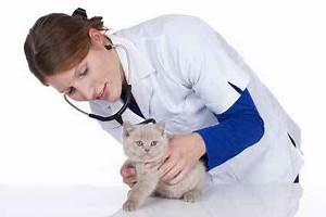 Katze Erbricht Oft : diabetes bei katzen heimtest ~ Frokenaadalensverden.com Haus und Dekorationen