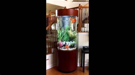 gallon cylinder aquarium youtube