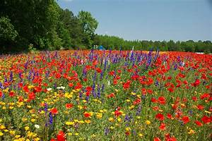 Which NC Roadside Has The Best Wildflowers? | WUNC