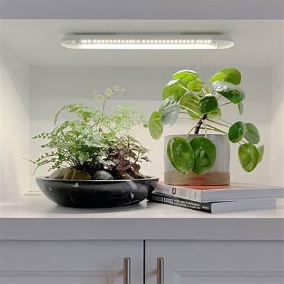 Plants Sun Grow Deprived Garden Indoor Uncommongoods