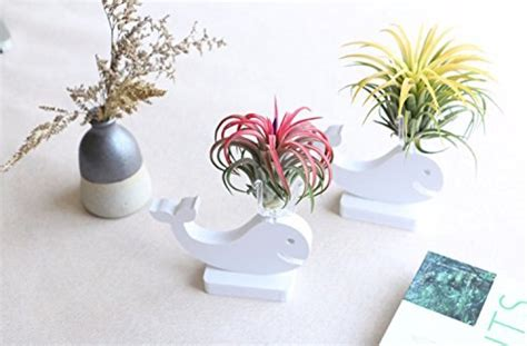 mkono air plant holder air plants pot container vase