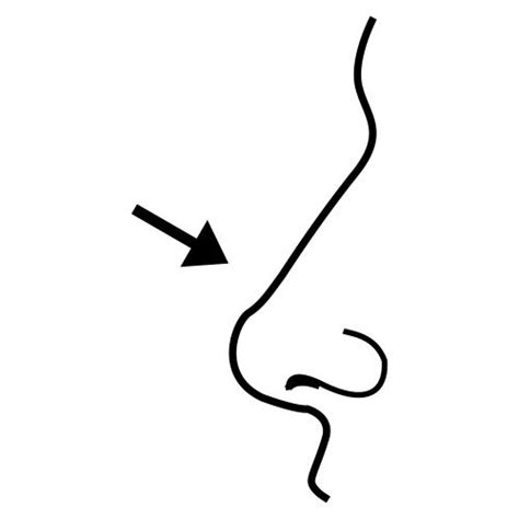 pin nose coloring page  pinterest